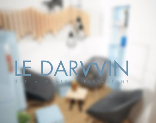 Troyes a enfin son bar à chats : le Darwin !