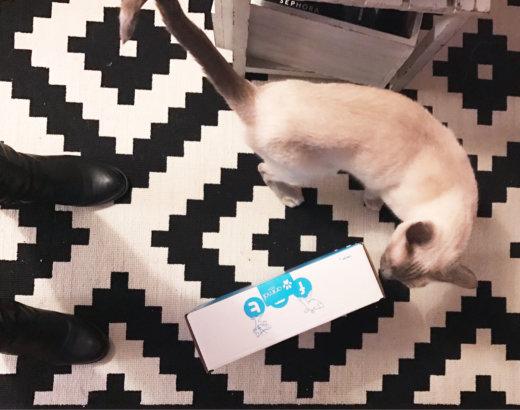 Miaoubox : la découverte de nouveaux produits pour chat