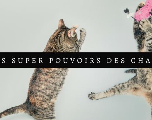 Les super pouvoirs du chat