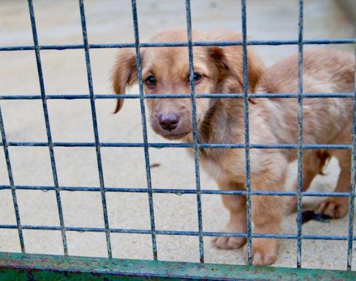 Le noël des animaux : découverte du refuge de la SPA de Saint-Parres aux tertres