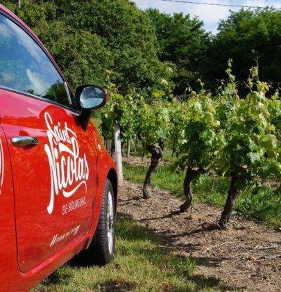 Découverte viticole à la rencontre des vignerons de Saint Nicolas de Bourgueil